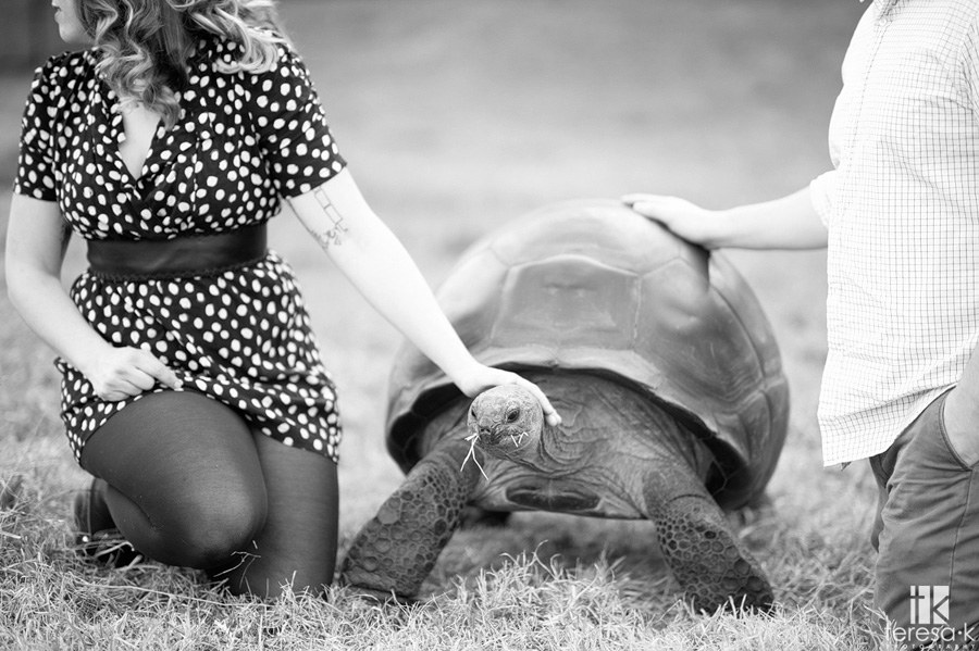 turtle at an engagement session