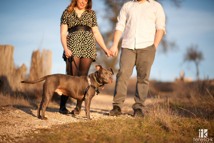bay area engagement session with blue pit bull