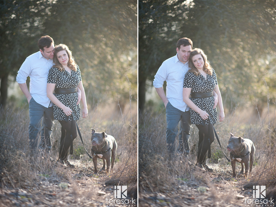 engagement session with a blue pit bull
