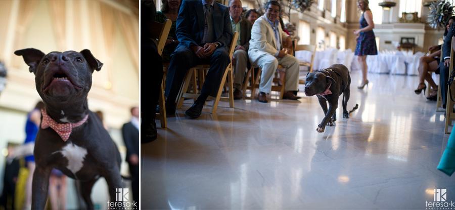 dog coming down the aisle at wedding