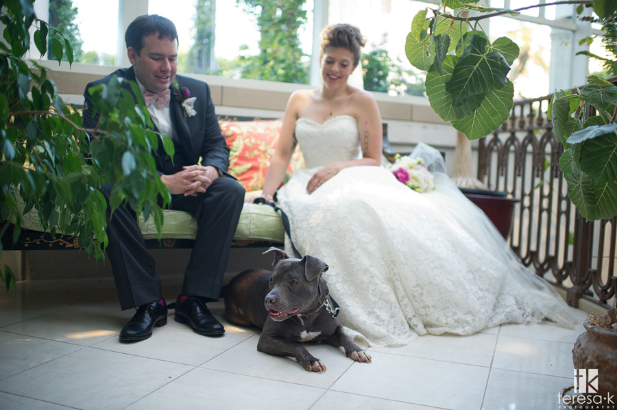 bride and groom portraits with pit bull dog
